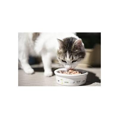 Karmy mokre dla kotów