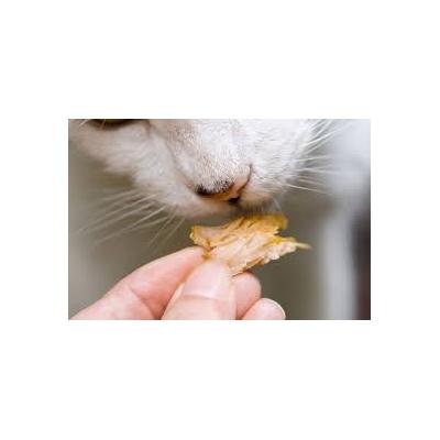 Przysmaki dla kotów